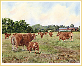 A Breed apart - a classic Cow Picture - click for details